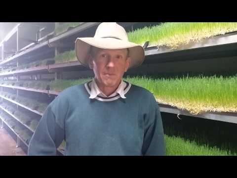 The Fodder Shed at Wallangra NSW -  Your questions answered.