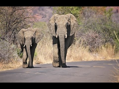 African Photo Safari _1     _(vid 86_720p)