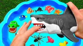 Learn Animals Names For Kid Surprise Animal - Shark Octopus - Fun Video Wild Animals