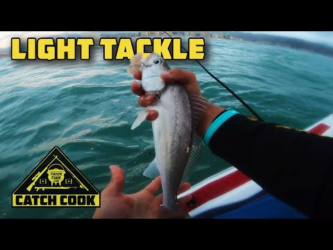 Light tackle fishing for kob / mulloway in False Bay, South Africa