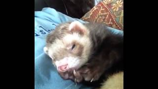 the ferret of truth