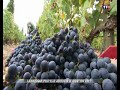 Reportage TF1 10 2017 - Swing it, vinification musicale
