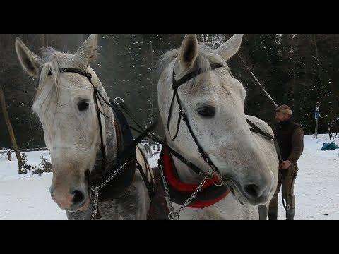 Konie na drodze do Morskiego Oka. Turyści nie mają skrupułów