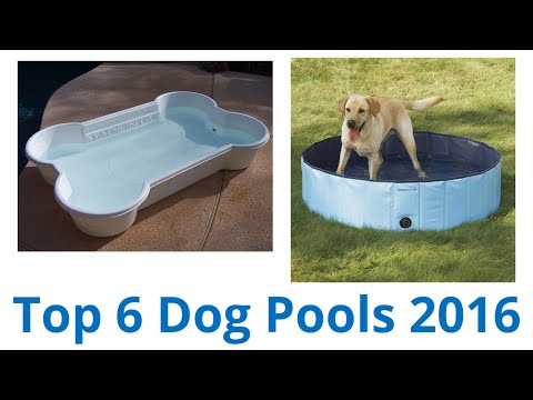 6 Best Dog Pools 2016