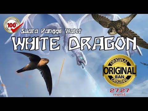 SP WHITE DRAGON 100% Original Open Protect Product BAN External Call Swiftlet