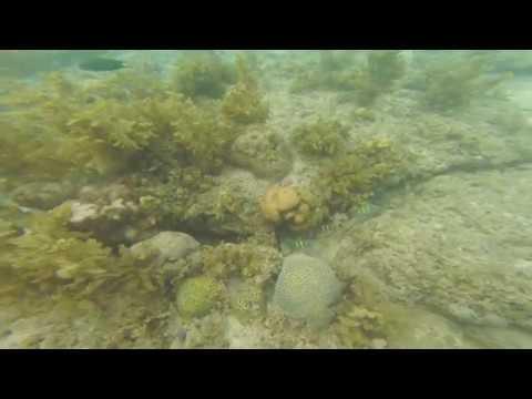 Virgin Island's Marine Life