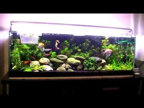 tropical aquarium 200 litres 52 gallons update 2 youtube. Black Bedroom Furniture Sets. Home Design Ideas