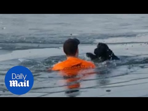 Incredible-moment-hero-jogger-jumps-into-frozen-lake-to-rescue-a-dog