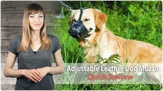 Adjustable Leather Dog Muzzle For Training And Walking - Review