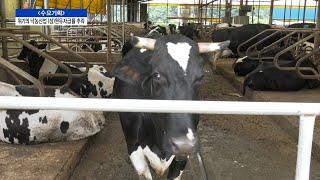 [수요기획] 위기의 낙농산업 (상)원유자급률 추락
