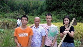 华农兄弟:兄弟王刚来我们家玩,带他们去池塘里面抓点鱼