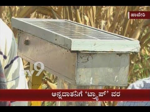 Department of Agriculture in Haveri Comes Out With New Idea to Control Pests