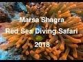 Marsa Shagra Red Sea Diving Safari 2018 (short)