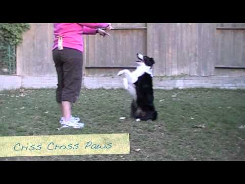 how to train a dog to sit pretty
