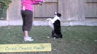 Criss Cross Sit Pretty - Clicker Dog Training Tricks