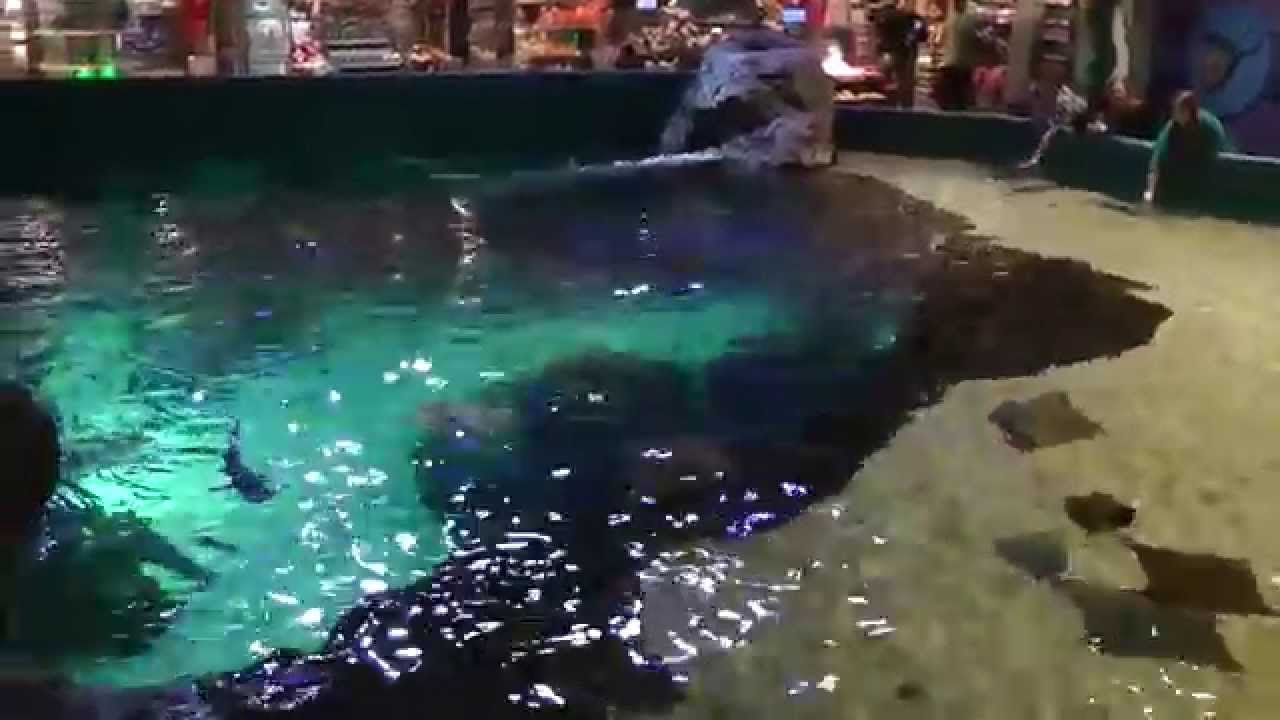 Shark Sharks Love Bites Juniors Soft Tank Top White Sm