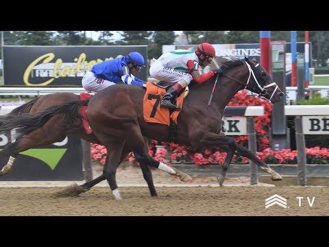TDN Videos - TDN | Thoroughbred Daily News | Horse Racing