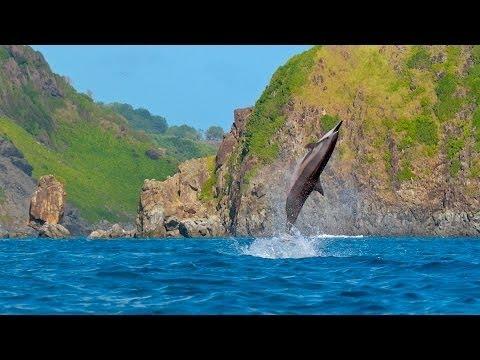 Projeto Golfinho Rotador - 25 years (english version)