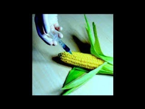 New GMO Crops Eat Your Guts from the Inside, Almost Everything You Consume is Genetically - The Best