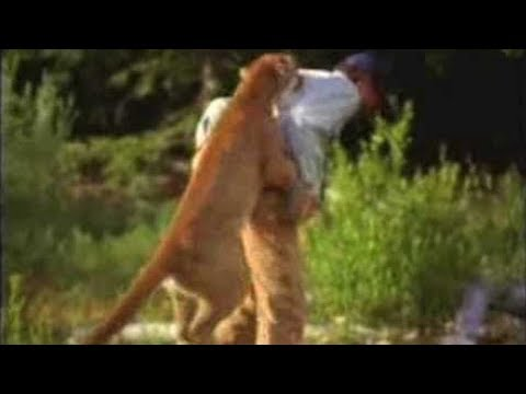 When Cougars/Mountain Lions Attack