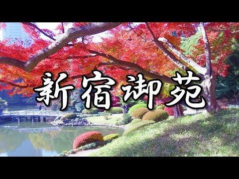 2017.11.29 東京・新宿御苑の紅葉と黄葉
