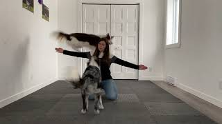 Amazing dogs tricks