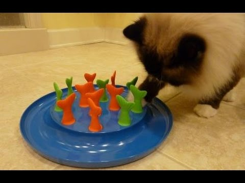 Petmate Jackson Galaxy Go Fish Cat Toy Cat Puzzle Toy Product Review - ねこ - ラグドール - Floppycats