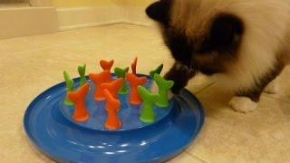 Petmate Jackson Galaxy Go Fish Cat Toy Cat Puzzle Toy Product Review - ?? - ????? - Floppycats