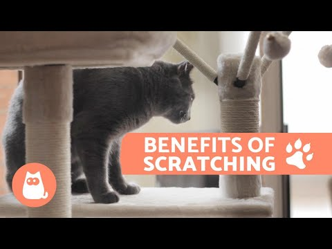 The Benefits Of Scratching Trees For Cats - And Where To Put Them