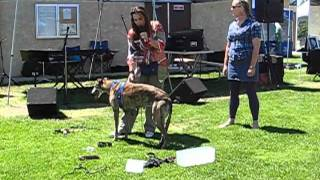 Positive Dog Training Equipment Demo 2 Of 2