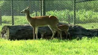 Amish Deer Farm in Ohio - Deer & Wildlife Stories 2010 Episode 4