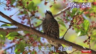 자연의 소리 (Sounds of nature)- 계곡의 물소리, 새소리 (3시간)