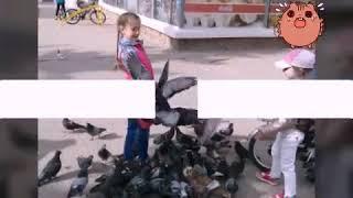 Самое смешное видео или нападение птиц.