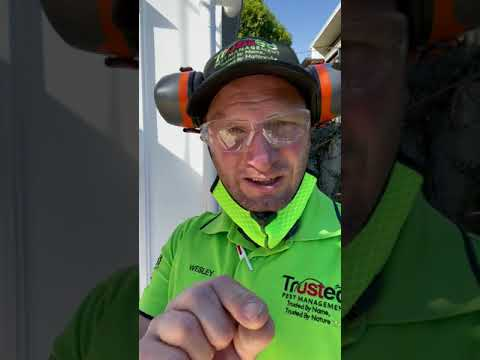 Importance of termite protection during construction