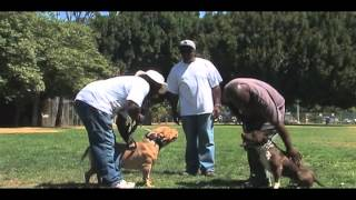 """Expert Dog Trainer: Larry Hill's Imprinting Tips """"how To Get Two Dogs Acquainted Properly"""""""