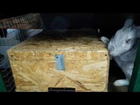 Маточники для кроликов своими руками видео 494