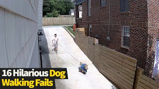 Top 16 Funniest Dog Walking Fails Caught On Camera