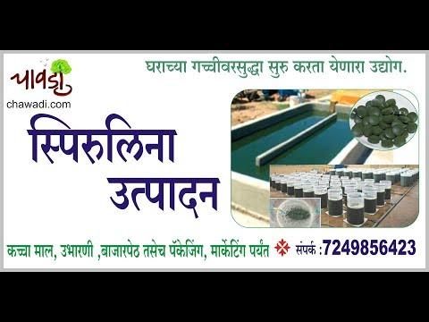 Spirulina Cultivation Business | स्पिरुलीना निर्मिती उद्योग मराठीमध्ये