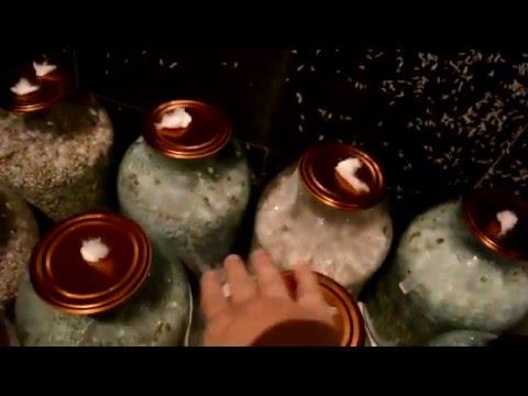 мицелий грибов в ашане