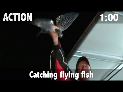 Catching Flying Fish
