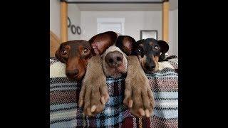 Отдам щенков в добрые руки