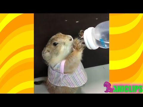 Funny Animal Drinking Water