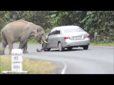 Smart elephant 'helping out'.