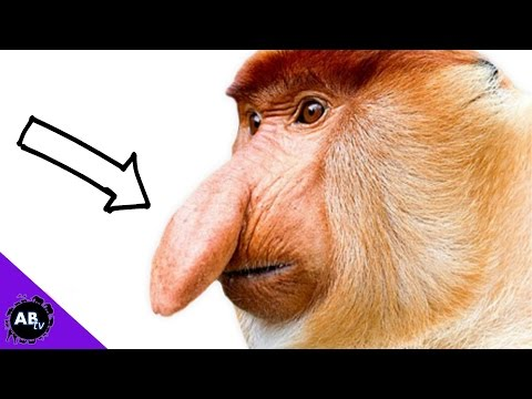 World's Biggest Penis Bone | Secrets of Bones | BBC EarthKaynak: YouTube · Süre: 2 dakika10 saniye