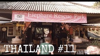 "SOOOO MANY! Elephant ""Parks"" in Chiang Mai ❤️ Why we chose this one (a lil sad) Video"