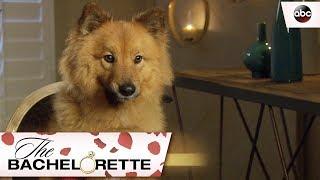Rachels Best Friend Copper - The Bachelorette 13x2