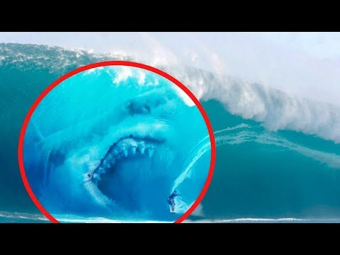 10 Megalodons Caught On Camera: Real or Fake?