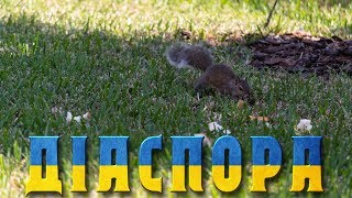 Діаспора | Безкоштовний зоопарк на задньому подвір'ї | Типова одноповерхова Америка