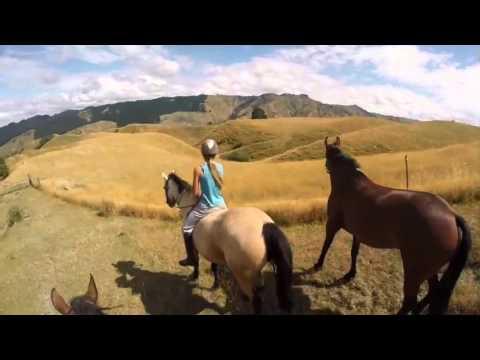 Fun Horse Trek NZ