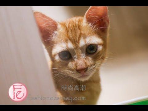 臺北「日日好時光」浪浪貓咪餐廳 JOURS BONBON Day Day riri haoshiguang cat cafe restaurant taipei daan district - YouTube